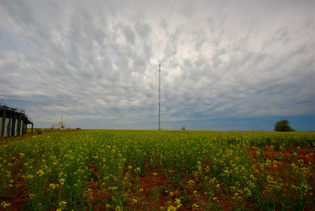 Most of Zhang's observational data comes from the ARM Southern Great Plains facility, where this 60-meter instrumentation tower stands near a field of canola in north-central Oklahoma.
