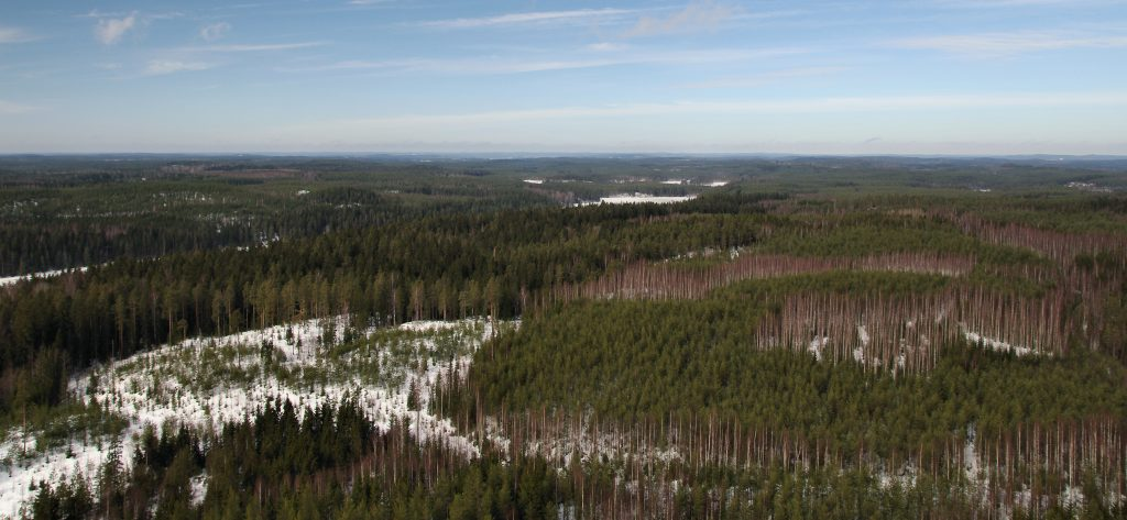 In her latest project, Chiu is using measurements from a region of boreal forest in Finland.
