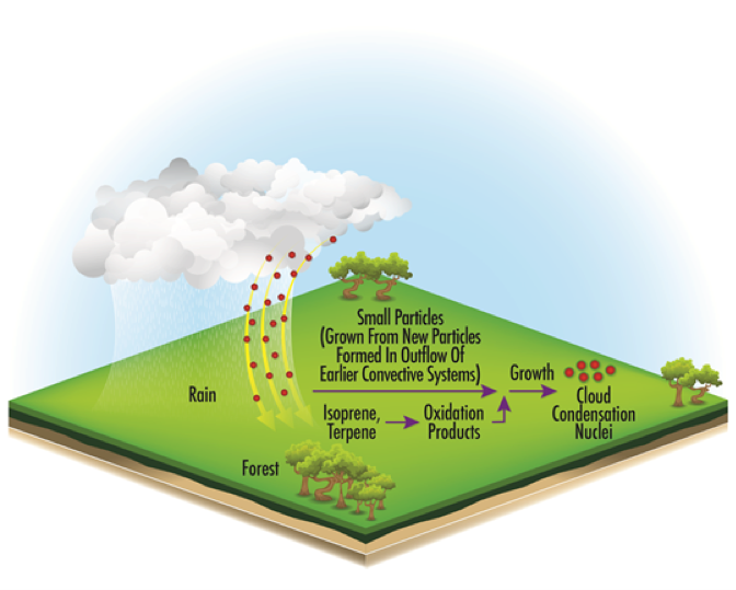 The SFA will draw on many data sets, including GoAmazon2014/15. Depicted here are processes that help maintain the population of cloud condensation nuclei in the Amazon atmospheric boundary layer under natural conditions. Graphic courtesy of Jian Wang.