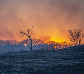 Scientists Examine the Black Carbon Impacts of Wildfires and Biomass Burning